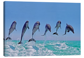 Canvas print  6 dolphins jump out of the water - Gérard Lacz