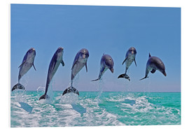 Forex  6 dolphins jump out of the water - Gérard Lacz