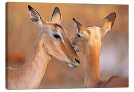 Canvas print  Impala friends, South Africa - wiw