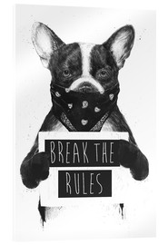 Acrylic print  Break the rules, rebel dog - Balazs Solti