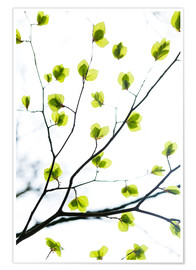 Premium poster  Signs of Spring - Mareike Böhmer Photography