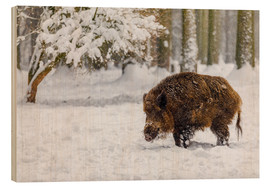 Wood print  Boar in the snow - Moqui, Daniela Beyer