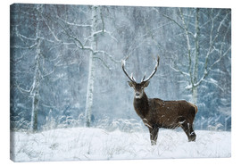 Canvas print  Silent moment in the wild snowdrift - Moqui, Daniela Beyer