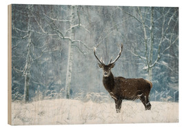 Wood print  Silent moment in the wild snowdrift - Moqui, Daniela Beyer