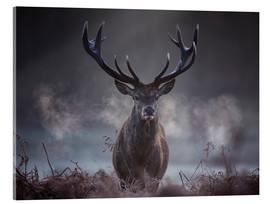 Acrylic glass  A majestic red deer stag breathing - Alex Saberi