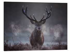 Aluminium print  A majestic red deer stag breathing - Alex Saberi