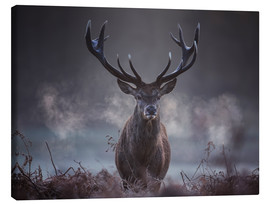 Canvas print  A majestic red deer stag breathing - Alex Saberi