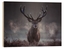 Wood print  A majestic red deer stag breathing - Alex Saberi