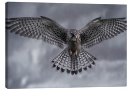 Canvas print  An Eagle bird hunting its prey with a stormy background. - Alex Saberi