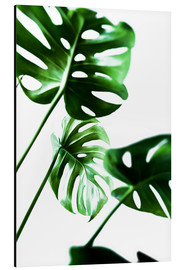 Mareike Böhmer Photography - Monstera 4