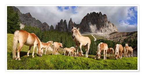 Premium poster Haflinger horses in a meadow in front of the Rosengarten Mountains