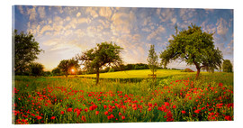 Acrylic print  Poppy meadow at sunset - Michael Rucker