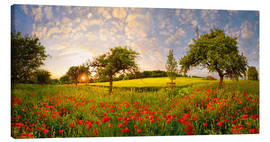 Canvas print  Poppy meadow at sunset - Michael Rucker