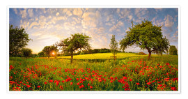 Premium poster  Poppy meadow at sunset - Michael Rucker