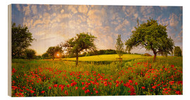 Wood print  Poppy meadow at sunset - Michael Rucker