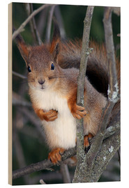 Wood print  Squirrel guards his tree