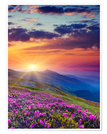 Premium poster  Rhododendron blossom in the Carpathians