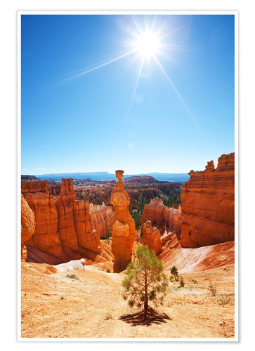 Premium poster Lonely tree in Bryce Canyon