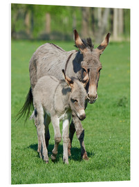 Foam board print  Donkey mum and her little baby