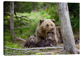 Canvas print  Brown bear with cubs in forest