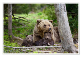Premium poster Brown bear with cubs in forest