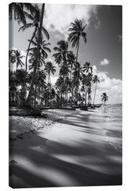 Canvas  Tropical palm trees on a Brazilian beach in black and white - Alex Saberi