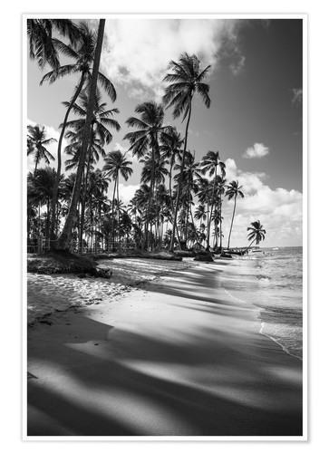 Premium poster Tropical palm trees on a Brazilian beach in black and white