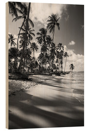 Wood print  Tropical palm trees on a Brazilian beach in black and white - Alex Saberi