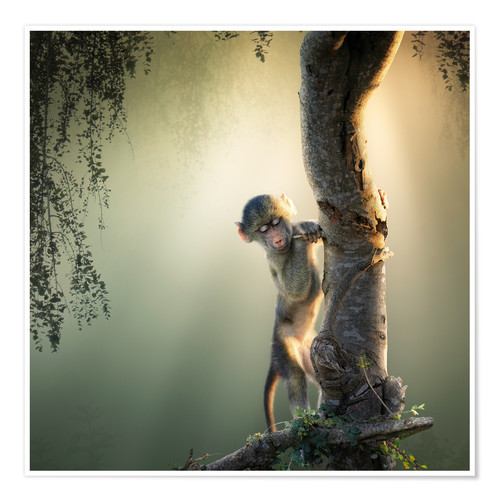 Premium poster Baby baboon in tree