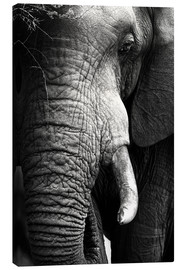 Canvas print  Elephant in the portrait - Johan Swanepoel