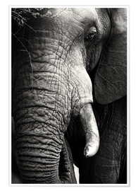 Premium poster  Elephant in the portrait - Johan Swanepoel