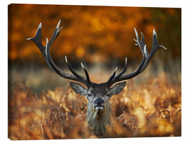 Canvas print  The stag king of fire - Alex Saberi