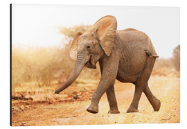Aluminium print  Happy elephant, South Africa - wiw