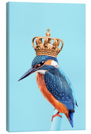 Canvas print  KINGFISHER - Jonas Loose