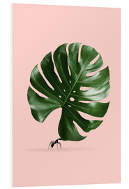 Foam board print  MONSTERA ANT - Jonas Loose