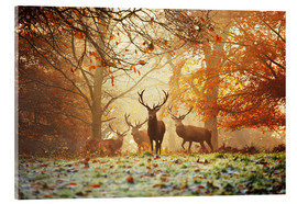 Acrylic glass  Stags and deer in an autumn forest with mist - Alex Saberi