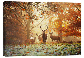 Canvas print  Stags and deer in an autumn forest with mist - Alex Saberi