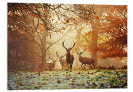 Foam board print  Stags and deer in an autumn forest with mist - Alex Saberi