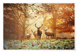 Premium poster Stags and deer in an autumn forest with mist