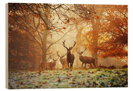 Wood print  Stags and deer in an autumn forest with mist - Alex Saberi