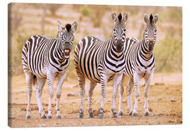 Canvas print  Three Zebras, one is so tired - wiw