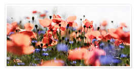 Premium poster  Poppies and Cornflowers - Lichtspielart