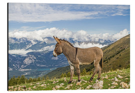 Aluminium print  Donkey on a Lonely Mountain Meadow