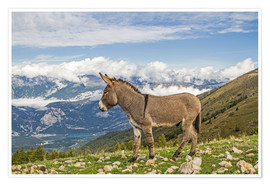 Premium poster  Donkey on a Lonely Mountain Meadow