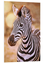 Forex  Young Zebra, South Africa - wiw