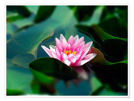 Premium poster Summer water lily IV
