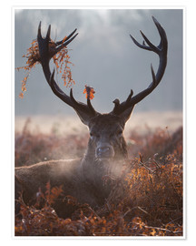 Premium poster  Deer Stag in Winter - Alex Saberi