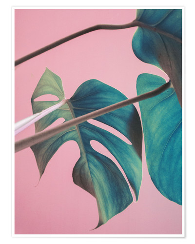 Poster Sweet pink monstera leaves