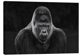 Canvas print  Portrait of a Gorilla - Manuela Kulpa