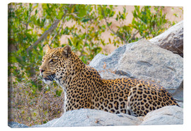 Fabio Lamanna - Leopard between rocks close up Kruger National Park, South Africa